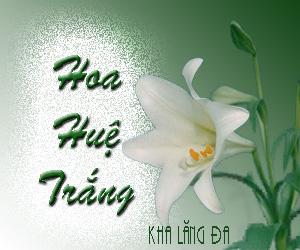 hoahuetrang_tua