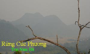 rungcucphuong-trainamha