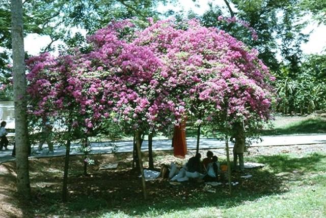 Người dân nghỉ ngơi dưới bóng cây trong Thảo Cầm Viên.