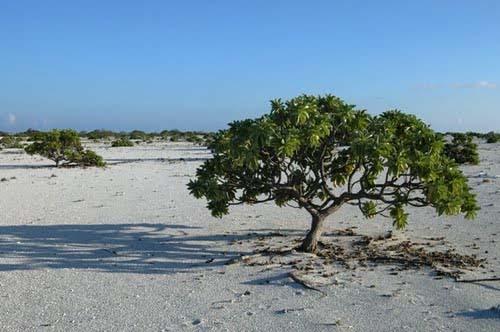 Bãi cát rộng lớn trên đảo Vĩnh Lạc